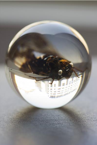 Acryleinschluss - Insekt